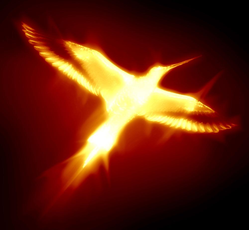 phoenix activity